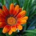 Szép virág