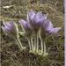Album - Itt a tavasz