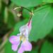 solo flower