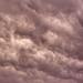 08.06 vihar 2