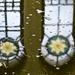 viziló-víz-tükör