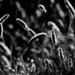 fekete fehér kuszaság