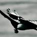 Véletlen madár