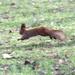 sietõs mókus