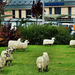 A bárányok hallgatnak....
