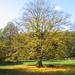 ősz a  Kercseg-laposon