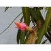 Pincében kivirágzott kaktusz