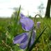 Tavasz a réten