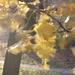 Őszi szél