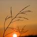 Őszi naplemente