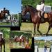 kísérletek, lovas ötször kollázs