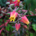 különleges növények, bájos ismeretlen