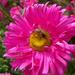 rovarok, méhecske térdvédővel