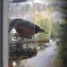 madarak, vendéglátás