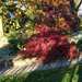 őszi színek, esti bokorizzás