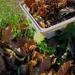 vadvirágok, az avarban egy novemberi pitypang