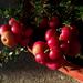 különleges növények, napozó apróságok